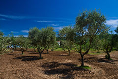 Panoramic view of a vineyard Stock Photos