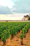 Panoramic view of a vineyard Stock Images