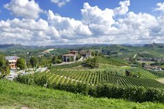 Panoramic view of vineyard during enological tour in Langhe driving italian vintage spider cars royalty free stock photo