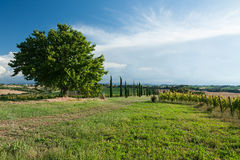 Panoramic view of vineyard and fields. Against a blue sky royalty free stock photo