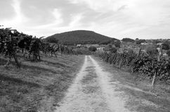 Panoramic view of a vineyard in Italy black and white Royalty Free Stock Photography