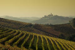 Panoramic view of a vineyard in Langhe region during autumn Royalty Free Stock Image