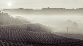 Panoramic view of a vineyard in Langhe region during autumn Stock Photography