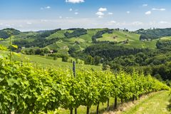View from vineyard to hills of south styrian wine route Royalty Free Stock Photo