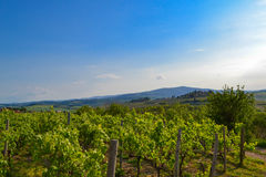 Panoramic view of a vineyard in the Tuscan countryside Royalty Free Stock Photography