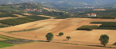 Panoramic view on vineyards and fields in Italy. Stock Photo