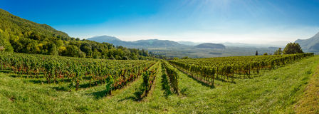 Panoramic view of the vineyards Royalty Free Stock Image