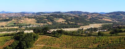 Vineyards in the italian countryside Stock Photo