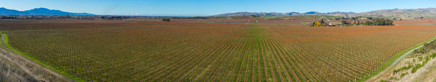 Panoramic view of the vineyards in the Marlborough region royalty free stock photography