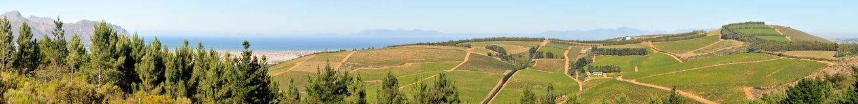 Panoramic view of vineyards near Sir Lowreys Pass Royalty Free Stock Images