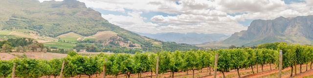Panoramic view of vineyards near Stellenbosch Royalty Free Stock Photo