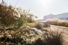 Panoramic view of the wetlands natural park La Marjal in Pego and Oliva, Spain. Segaria mountain is in the background royalty free stock photography