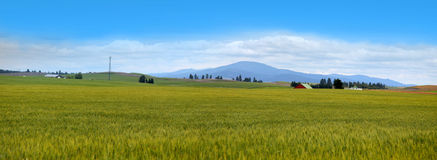 Wheat fields in Montana. Panoramic view of Wheat fields in Montana Royalty Free Stock Image