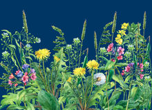Panoramic view of  wild meadow flowers and grass, isolated on blue background. Royalty Free Stock Image