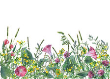 Panoramic view of wild meadow flowers and grass on white background. Stock Images