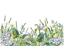 Panoramic view of wild meadow flowers and grass on white background. Royalty Free Stock Image