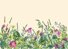 Panoramic view of wild meadow flowers and grass on yellow background. Stock Image
