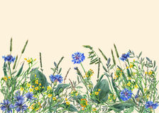 Panoramic view of wild meadow flowers and grass on yellow background. Stock Photos
