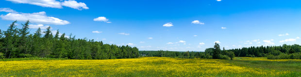 Panoramic view of wildflowers in field Stock Image