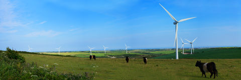Panoramic view of a wind farm and cattle Royalty Free Stock Photography