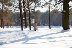 Landscape image of winter forest and rear view of walking woman royalty free stock photo