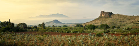 Panoramic views of the Agave mountains in the background.  stock photos