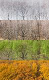 Panoramic views of forest in four seasons stock image