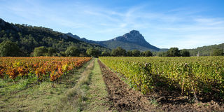 Panoramic of vines in between the mountains Stock Photos