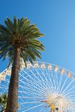 Panoramic wheel with palm Royalty Free Stock Image