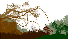 Panoramic wild forest landscape with silhouettes of trees and plants Royalty Free Stock Photography