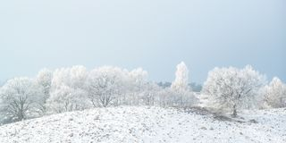 Panoramic winter view with snow of the Dutch Posbank in national Stock Photos