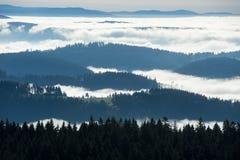 Panoramica circa la foresta nera Fotografia Stock