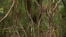 Panoramica di un boschetto delle palme video d archivio