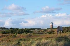 Panoramica di una duna Landscsape con una torre di acqua e un cavallo di pascolo dell'entrata Immagini Stock Libere da Diritti