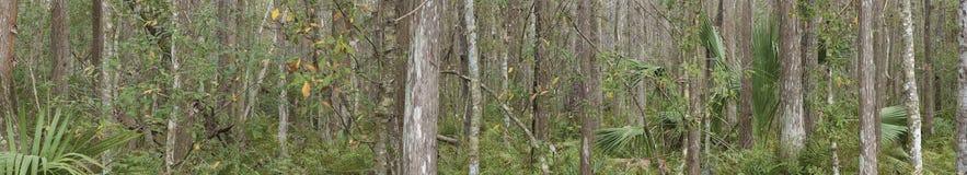 PANORAMICA FLORYDA ŚRODKOWI lasy 4 obrazy royalty free