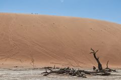 Free Panoramica Of Death Vley In The Desert Of Namibia. Sossusvlei. Stock Photography - 116748762