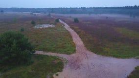 Panoramica porpora della brughiera video d archivio