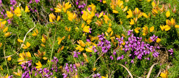 Panoramical natural land flower Royalty Free Stock Photo