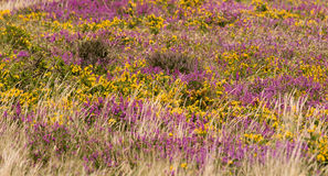 Panoramical natural land flower Royalty Free Stock Photography