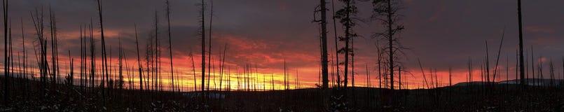Panoramico cucito del tramonto nel parco nazionale di Yellowstone Fotografia Stock