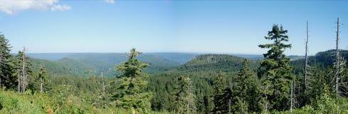 Panoramico della foresta nera Fotografie Stock Libere da Diritti