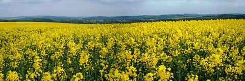 Panoramico in primavera Immagini Stock