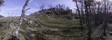 Panoramiczna fotografia przy wejściem las dokąd gąszcz zaczyna z swój drzewami i kopem który gacenia ja zdjęcie stock