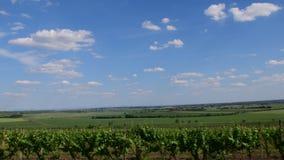 panoramicznego widok winnica Winnica w wiośnie zielony winnica i niebieskie niebo zdjęcie wideo