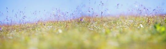 Panoramiczny łąkowy tło Zdjęcia Stock