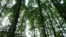 Panoramiczny drzewa koronuje, las, dżungla, cienia cień zbiory