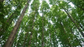 Panoramiczny drzewa koronuje, las, dżungla, cienia cień zdjęcie wideo