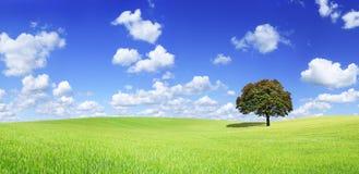 Panoramiczny idylliczny widok, osamotniony drzewo na zieleni polu obrazy royalty free