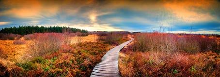 Panoramiczny jesień krajobraz z drewnianą ścieżką Spadek natury backgro