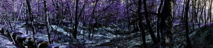 Panoramiczny krajobraz fantazj drewna Zdjęcia Stock